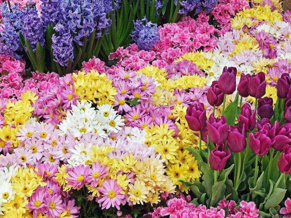 flower prints wallpaper