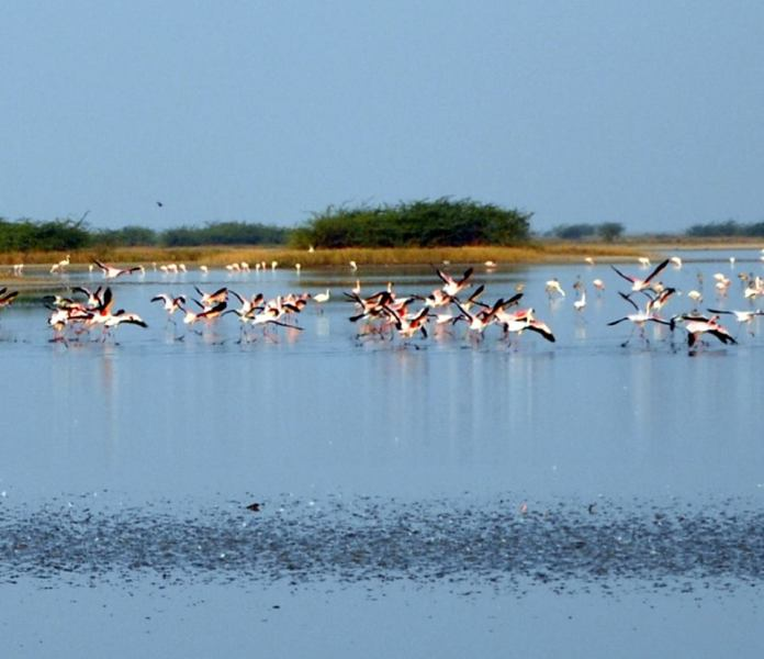 Travel Blog India | Lesser Flamingos the rann of kutch