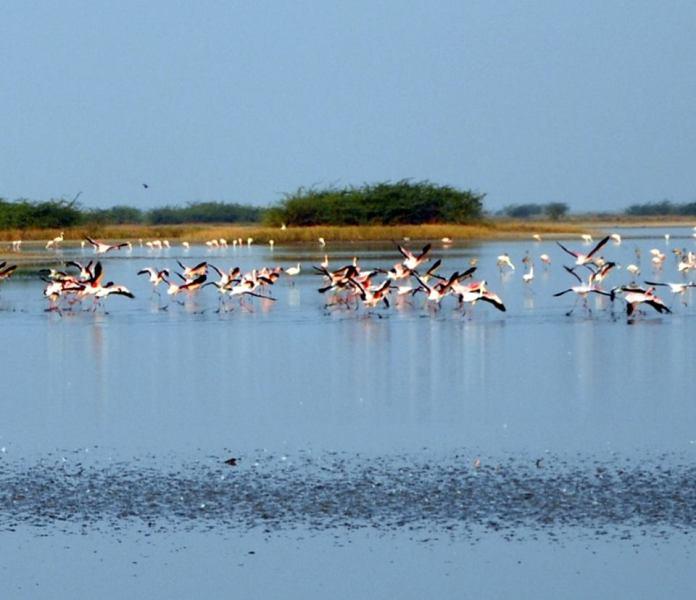 Travel Blog India | Lesser Flamingos the rann of kutch