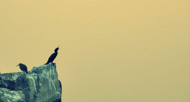 Travel Blog India | little rann of kutch width=
