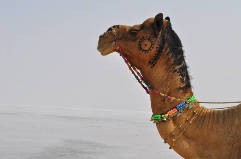 Travel blog India | the of the desert in rann of kuch