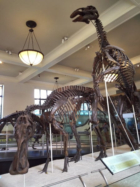 Travel blog | dinosaur wing in the museum | best things to visit in new york