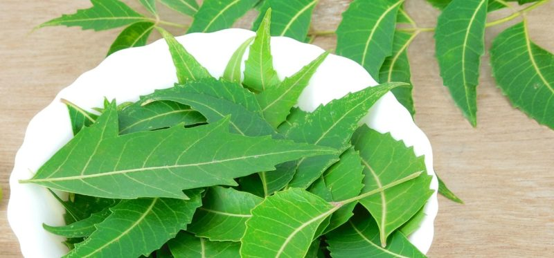 Neem is a powerful antibacterial agent and is great against germ protection. Source - stylecraze